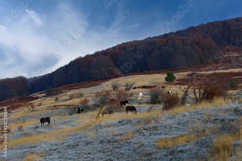 Horses on a mountainside a winter breakfast with orange trees and sky background