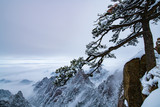 pine tree covered by snow on the mountain