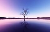 3d rendering of lonely dead tree in seashore landscape - 242239626
