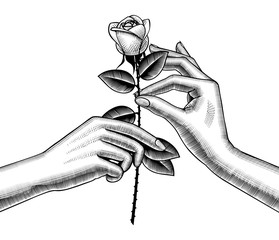Woman's hand give red rose into other hand © Raman Maisei