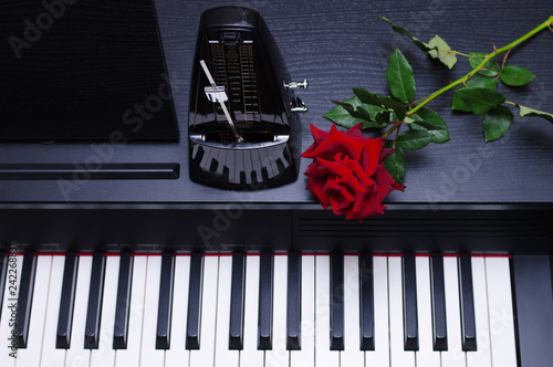 Keyboard piano and red rose.  - 242268831