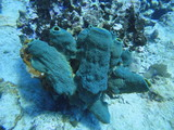 Blue coral on the seabed - 242269469