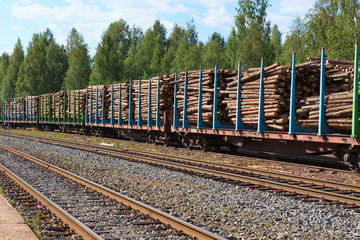 Tree cargo in train at summer day