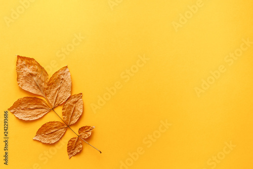 Foto Murales A blank yellow background with place for text. Copy space. Yellow autumnal leaf as a decoration. Concept composition