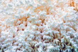 White coral mushroom in the forest