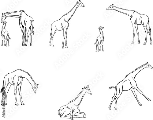 Giraffes in motion, different poses, figure, black, animal, illustration