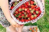Basket of ripe red strawberries in female hands, fruit background. Summer, farm, garden. - 242314624