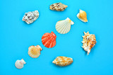 sea and ocean shells on a blue background, sea shells, beautiful seashells - 242319416