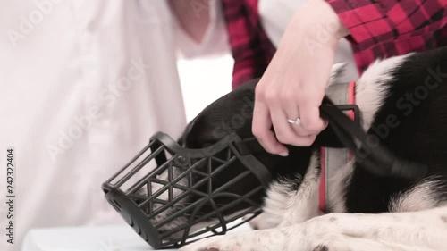 Dog with muzzle
