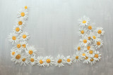 Chamomile card on light gray silver textural background