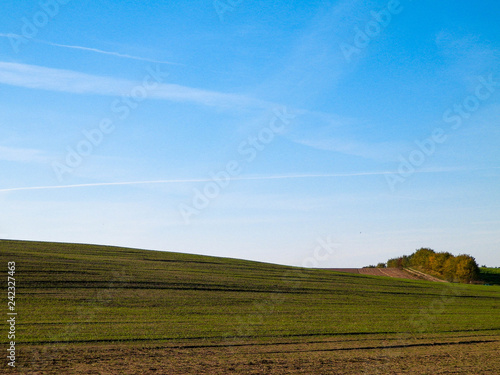 obraz lub plakat Green field on a background of blue sky