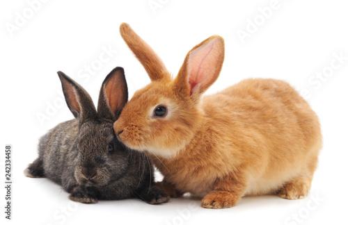Leinwandbild Motiv Two little rabbits.