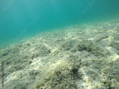 obraz lub plakat Rocks and seaweeds in Alghero seabed