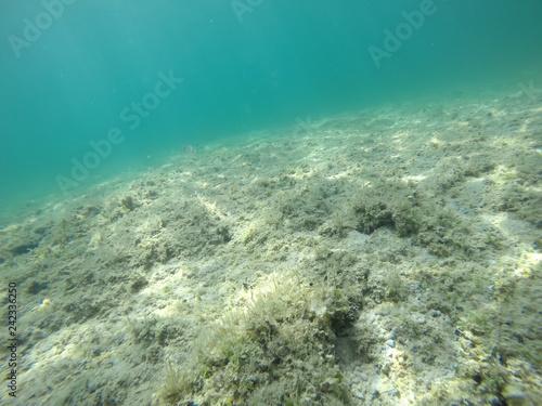 obraz PCV Rocks and seaweeds in Alghero seabed