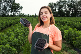 Black currant growers engineer working in  garden with harvest, woman  with box of berries