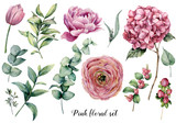 Hand painted floral elements. Watercolor botanical illustration with ranunculus, tulip, peony, hydrangea flowers, berries and eucalyptus leaves isolated on white background.  Nature objects for design - 242340409
