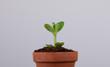 ecology plant
