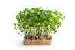 Cress salad isolated on white
