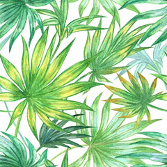 Palm leaves seamless pattern  on white background watercolor drawing.