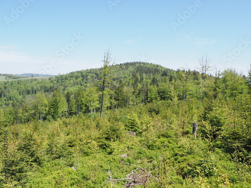 Wild Salmopol pass near Kotarz mount in Silesian Beskids Mountains range landscape above european Szczyrk city in Poland