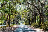 Fototapeta Sawanna - Street road landscape with oak trees and trail path in Savannah, Georgia famous Bonaventure cemetery, spanish moss © Kristina