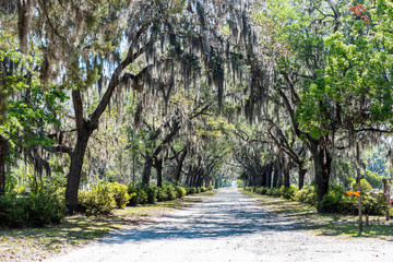 Nobody on street road landscape with oak trees and trail path in Savannah, Georgia famous Bonaventure cemetery, spanish moss