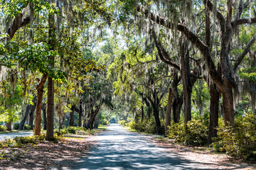 Street road landscape with oak trees and trail path in Savannah, Georgia famous Bonaventure cemetery, spanish moss