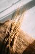 Leinwanddruck Bild - Cut the wheat ears lying on a background of burlap