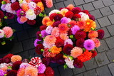Bright bunches of colorful pompom dahlia flowers at the market
