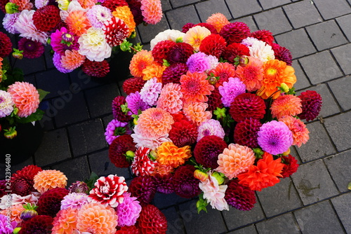 Foto Murales Bright bunches of colorful pompom dahlia flowers at the market