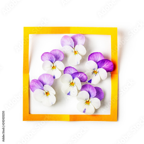 Frame with pansy flowers