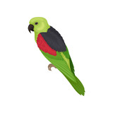 Lory parrot with bright feathers. Australian bird. Fauna theme. Detailed flat vector element for ornithology book