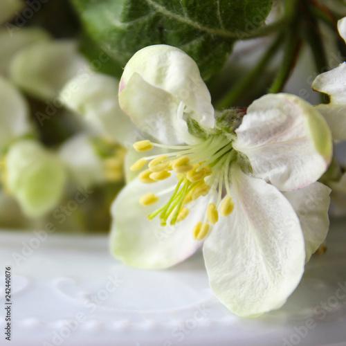 beautiful white flowers apple tree garden