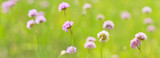 light pink wild flowers in green stripe