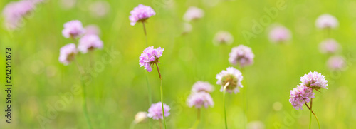 Leinwanddruck Bild light pink wild flowers in green stripe
