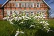canvas print picture - Schneeglöcken vor Fachwerkhaus