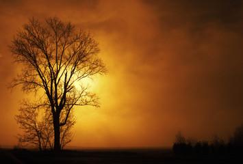 panorama di nebbioso di campagna al mattino  © Giuseppe Porzani