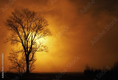 panorama di nebbioso di campagna al mattino