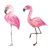 Watercolor illustration with pink flamingo
