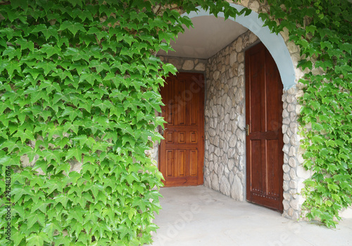 Wooden door with green leaves. Green leaf wall