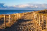 Weg auf den Dünen an der niederländischen Nordsee - 242496219