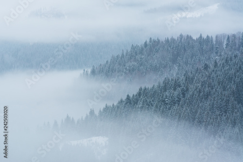 Fog covering the mountain forests in winter
