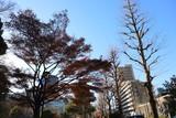 晴れた冬の日の都会の風景 - 242503262