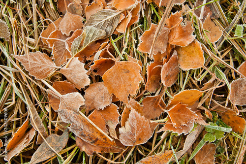 mata magnetyczna Frozen leaves background. Frozen texture.