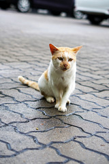 Beautiful cat on the street - Image