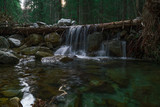 forest nature waterfall