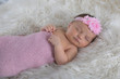 Newborn baby in pink swaddle - 242521027