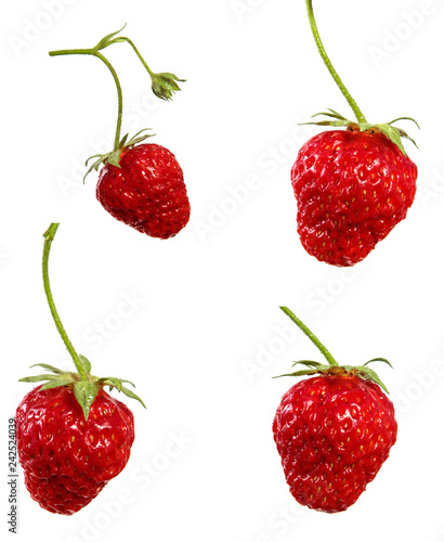 A fresh strawberry berry on a branch on an isolated white background, set