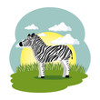 cute zebra in the field scene