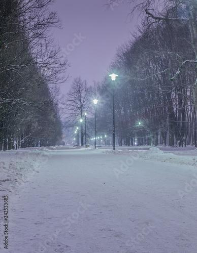 mroźny zimowy wieczór w parku